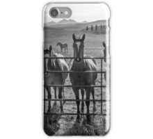 Four Horses walk into a bar.... iPhone Case/Skin
