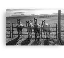 Four Horses walk into a bar.... Canvas Print