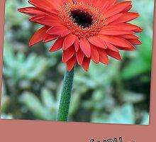 A card for a friend by Elizabeth Kendall