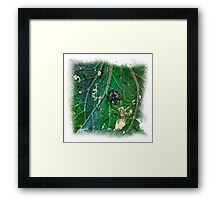 The Atlas Of Dreams - Color Plate 41 Framed Print