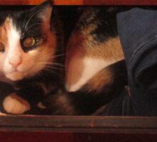 Cute Cat in a drawer Sticker