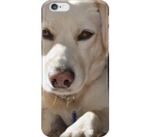 White Lab looking at you iPhone Case/Skin
