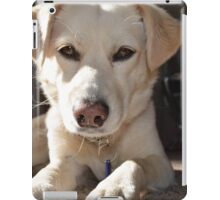 White Lab looking at you iPad Case/Skin