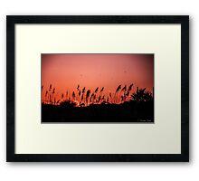 Dragonflies Over Dune Grass Framed Print