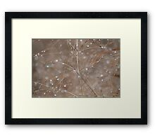 Autumn grass with raindrops Framed Print
