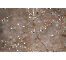 Autumn grass with raindrops Photographic Print