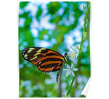 Orange & Black Butterfly White Flowers Poster