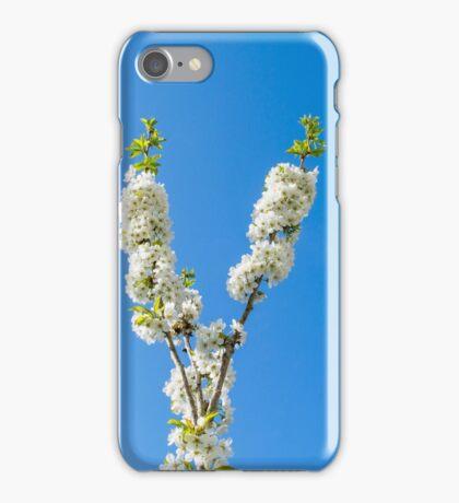 Cherry Tree Spring iPhone Case/Skin