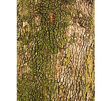 Weathered Oak  Photographic Print