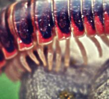 millipede 4 Sticker