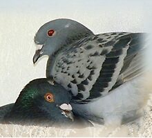 Lovers - Love for Pigeons by Maree Clarkson