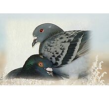 Lovers - Love for Pigeons Photographic Print