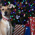 Christmas Pup by Casey VanDehy