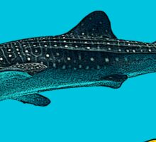 Isla Mujeres - Whale Shark Sticker