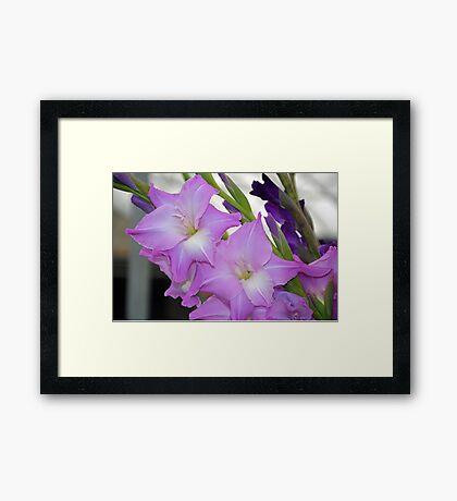 Pink gladiola flowers Framed Print