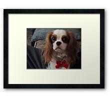 Dog for the Holidays Framed Print