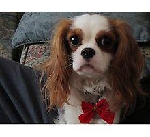 Dog for the Holidays Photographic Print