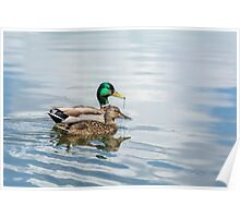 Mr. and Mrs. Mallard Poster