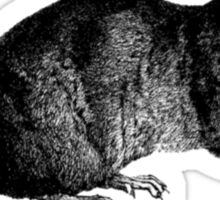 Rat (Ben) Sticker