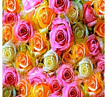 Spring Roses Photographic Print