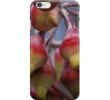 Eucalyptus Pods iPhone Case/Skin