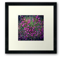 pretty flowers for my followers Framed Print