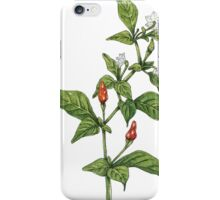 Chilly plant iPhone Case/Skin