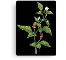 Chilly plant Canvas Print