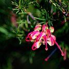 Pink and Lemon Grevillea by Lozzar Flowers & Art
