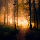 Forest Sunset by Helmar Designs