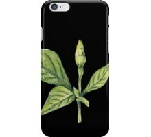 Chilly plant- green fruits iPhone Case/Skin