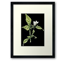 Chilly plant- flowers Framed Print