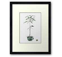 Avocado Tree Framed Print