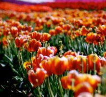 Tulip Festival Sticker