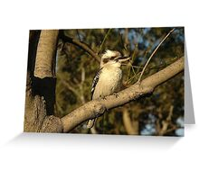 Kookaburra, Saint Leonards, Australia 2005 Greeting Card