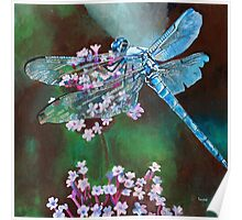Blue Dragonfly Resting On Wild Garlic Poster