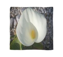 Overhead View of A White Calla Lily Against Pebbles Scarf