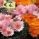 Bright Bouquets by phil decocco