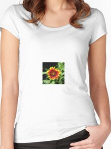 Gaillardia (Blanket Flower) Close-up  Women's Fitted Scoop T-Shirt