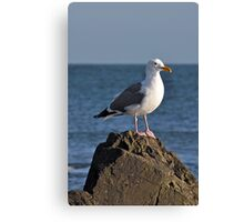 Grey and white seagull Canvas Print
