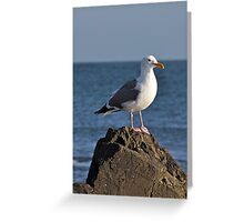 Grey and white seagull Greeting Card
