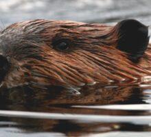 Maine Beaver Sticker