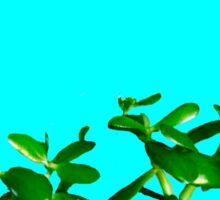 Good Luck Succulent Tree on Sky Blue Sticker