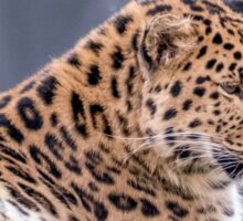 Amur Leopard Sticker