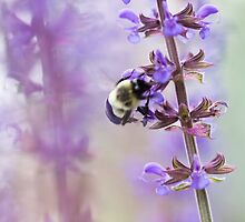 Purple and Bumble by Megan Campbell