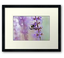 Purple and Bumble Framed Print