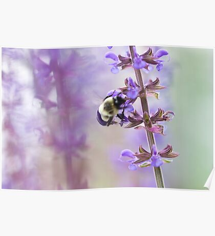 Purple and Bumble Poster