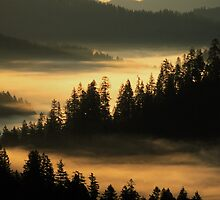 First Light at Indian Valley - Suislaw National Forest by TheCurators