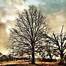 The Tree by Scott Mitchell