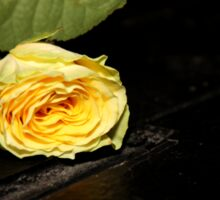 Yellow rose on an empty stage Sticker